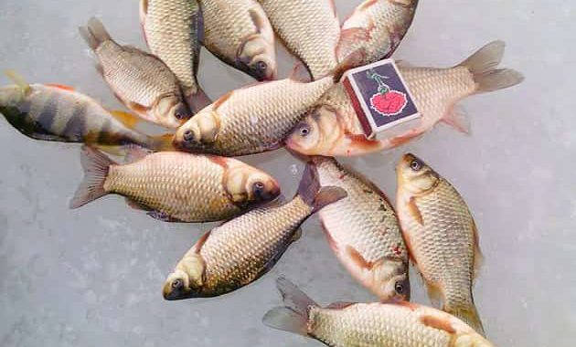 Ловля рыбы на косынку зимой