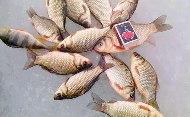 Снасть косынка для ловли рыбы на зимней рыбалке