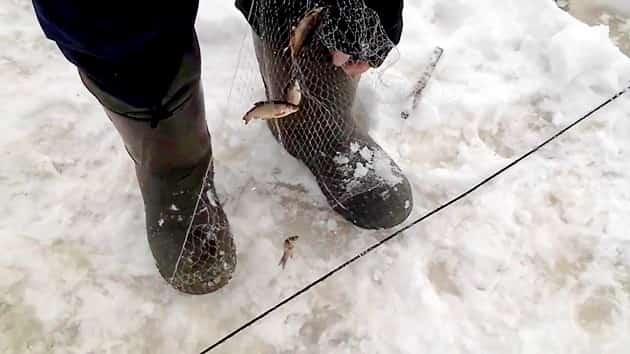 Ловля живца на косынку зимой