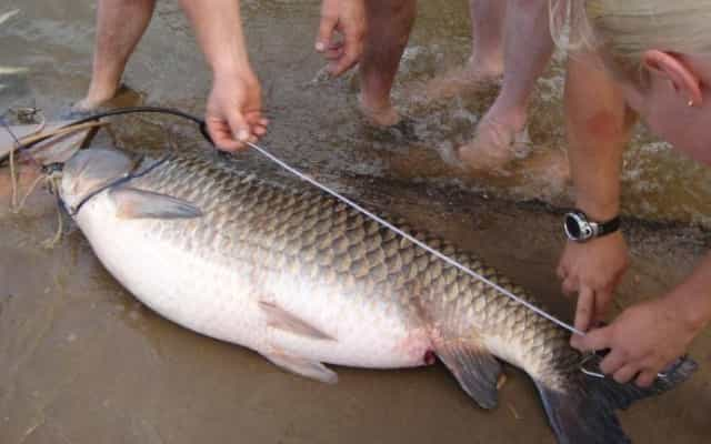 Допустимые размеры рыбы по новому закону