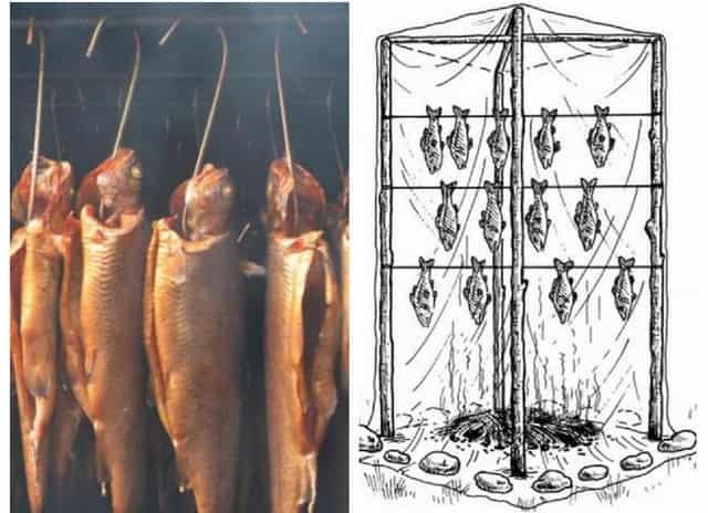 Как коптить ароматную и вкусную рыбу в походных условиях