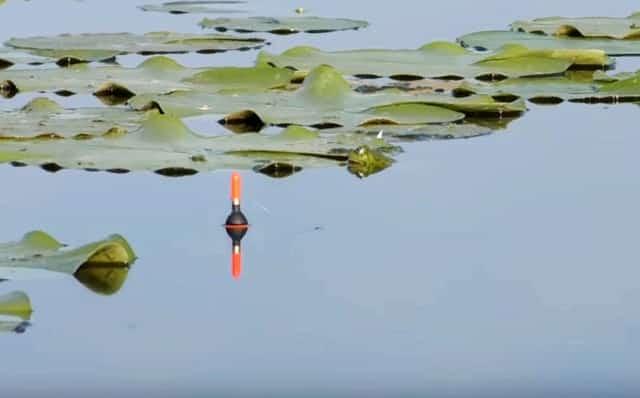 Спиннинг и поплавок - разные виды ловли рыбы