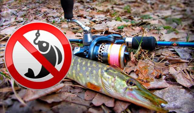 На что можно ловить рыбу в нерестовый запрет