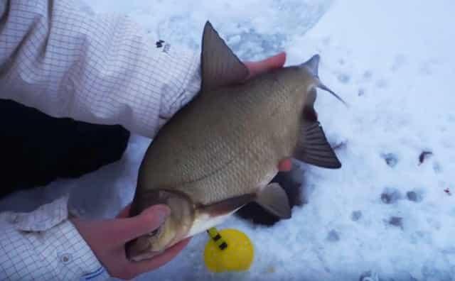Рыбалка в феврале на леща