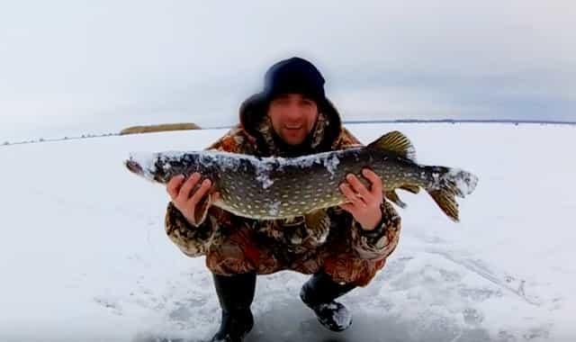 Рыбалка в феврале на щуку