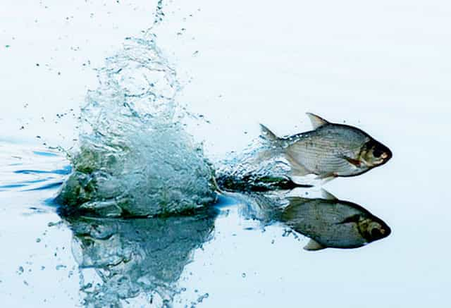 нерест рыбы весной