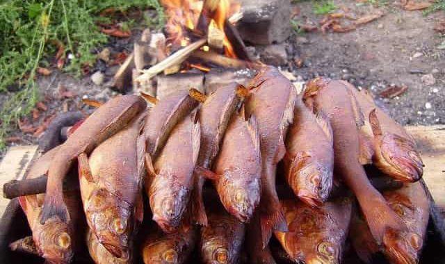 Холодное копчение рыбы в походных условиях на природе
