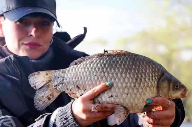 Ловля на мамалыгу и советы бывалых опытных рыбаков