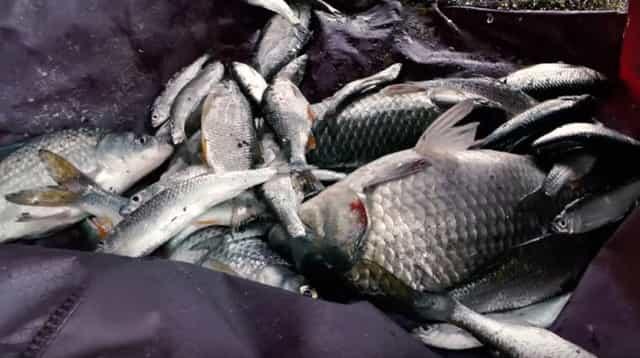 Отсечь мелочь на рыбалке