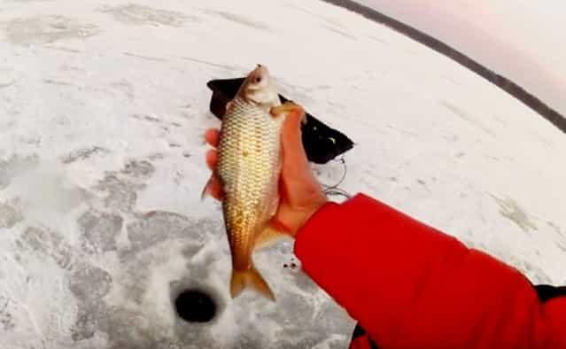 Рыбацкая история про крупную зимнюю плотву