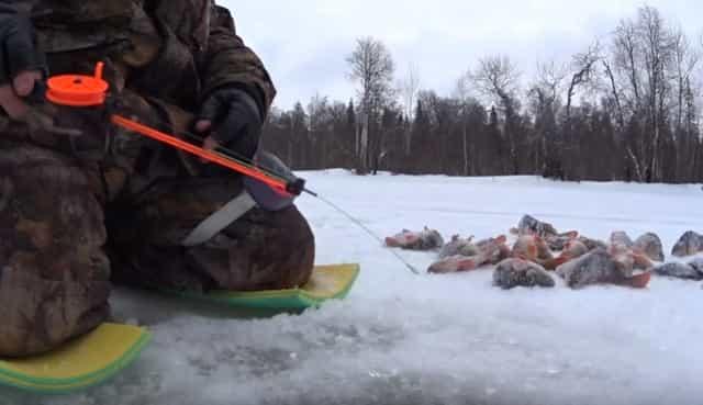Что влияет на клёв и улов на рыбалке