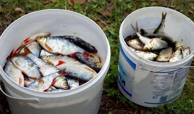 История как хитрый дед рыбоохрану обманул