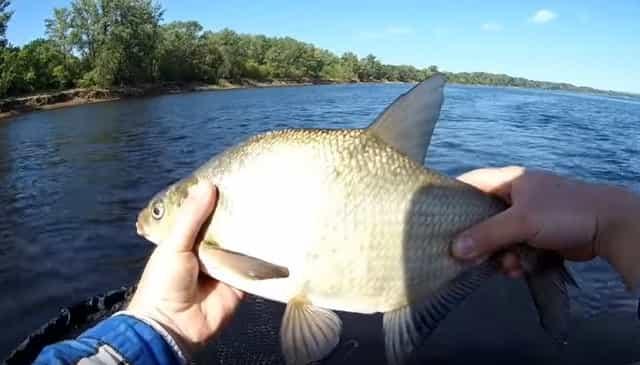 Когда начинает клевать лещ весной • Мега Рыбак