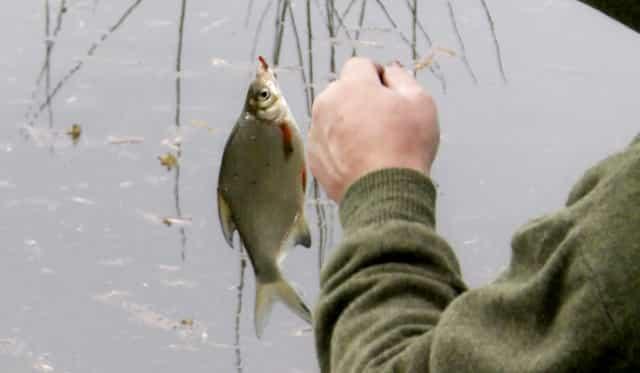 Весення рыбалка - ловля сорожки (плотвы)