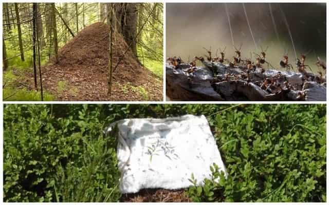 Муравьиная кислота против комаров в лесу
