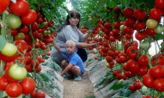 Налог на огород - теплицы, для выращивания урожая в промышленных масштабах на продажу