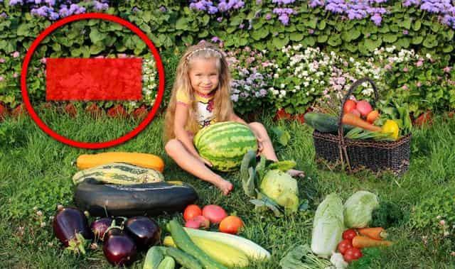 Штраф за овощи и ягоды в огороде на даче