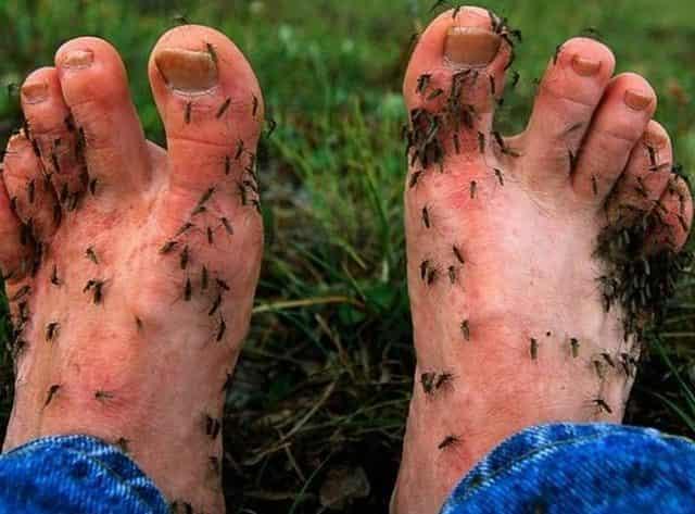 Что делать, если укусил клещ, комар или мошка и как защититься