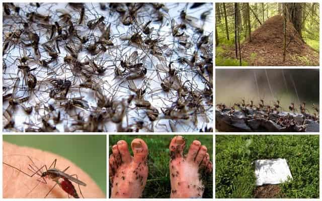 Защита от комаров и мошек - лесной проверенный способ от егеря