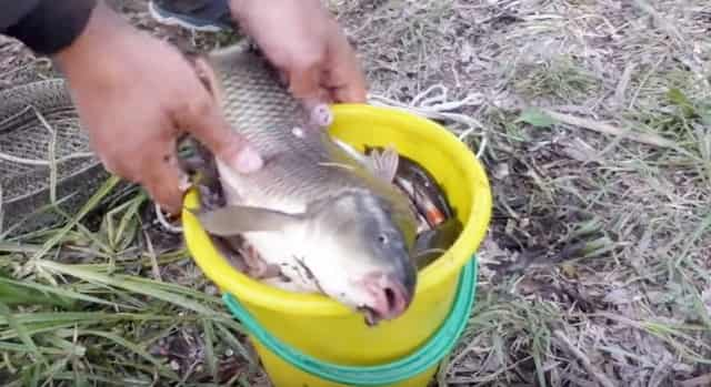 Аттрактант (ароматизатор) для ловли карася