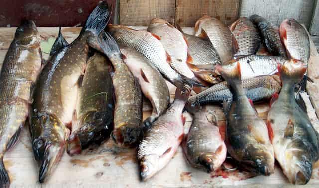 Удачный улов - цена отличной рыбалки