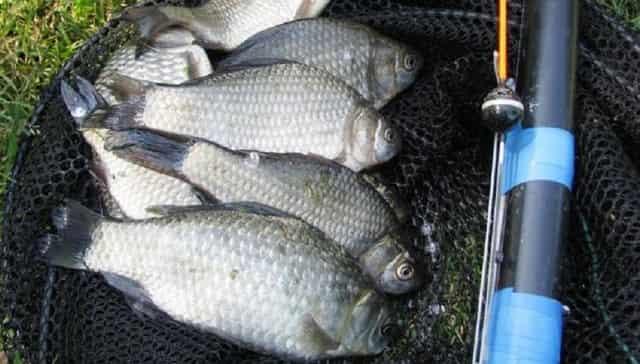 Рыбалка в мае - правила ловли