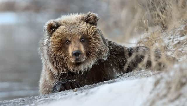 Медведь в зимнем лесу