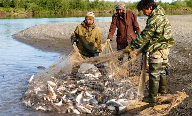 Рыбаки Севера - им разрешено ловить сетями