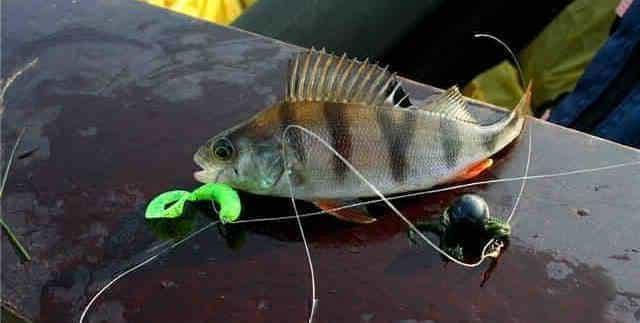 Дропшот рыбалка - уловистая снасть на хищника