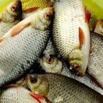 Зимняя рыбалка на снасть Шарик