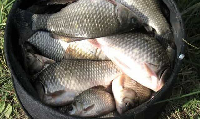 Как в 2-3 раза увеличить количество поклёвок - дельный совет для донной и фидерной ловли рыбы