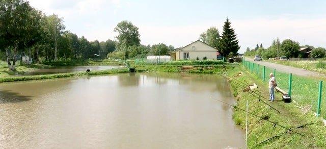 Деревенский пруд и платная рыбалка