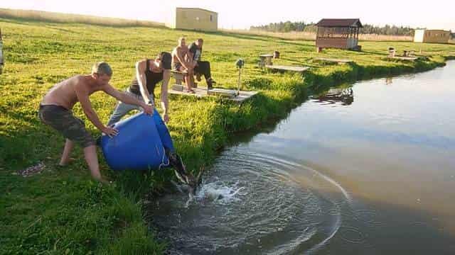 Рыбацкая история пруд в деревне