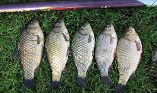 Уловистая наживка на белую рыбу - мало кто знает о ней
