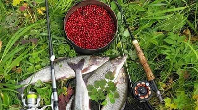 Ягоды – насадка на белую рыбу