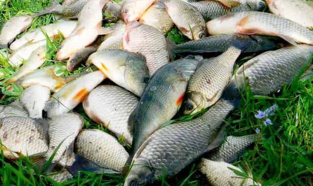 Добавка для рыбалки, которая мощно привлекает и приманивает рыбу