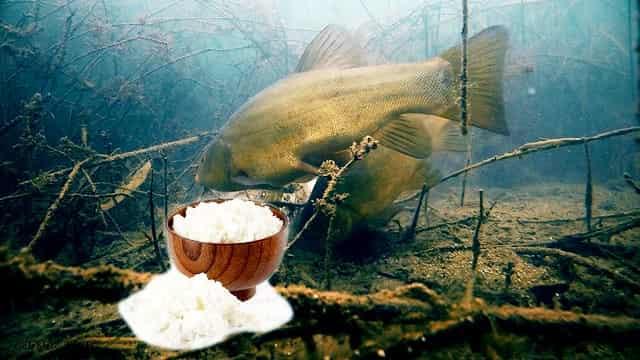 """Красивая подводная съёмка рыбы """"Линь"""" и его реакция на творог"""