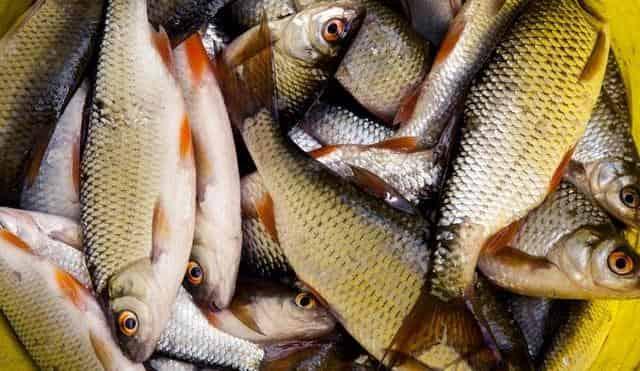 Ловля мирной рыбы на новую ароматную перловку