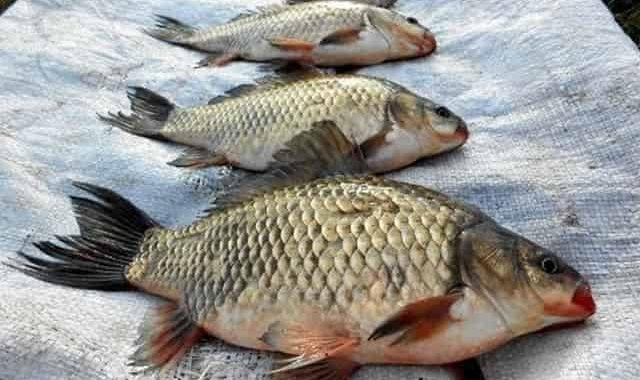 На такую насадку рыба клюёт безотказно