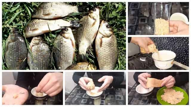 Рецепт насадки из гороха для ловли карася и карпа