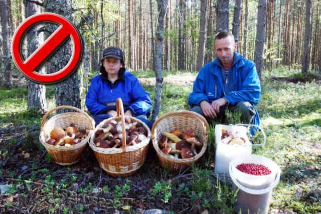 Штраф и налог за грибы и ягоды