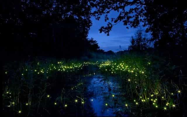 Свет светлячков в траве
