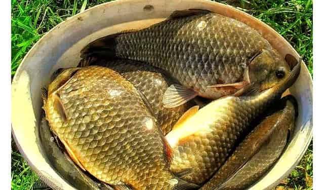 """Рыбацкая хитрость, чтобы пробудить в рыбе """"зверский"""" аппетит"""