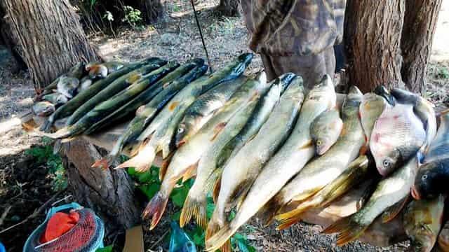 Отличная новость для рыбаков: в Астрахани разрешено за сутки ловить в 2 раза больше