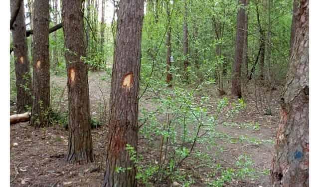 Делайте насечки на деревьях - попробуйте выйти из леса сами