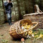 Как выжить в лесу, если ты заблудился