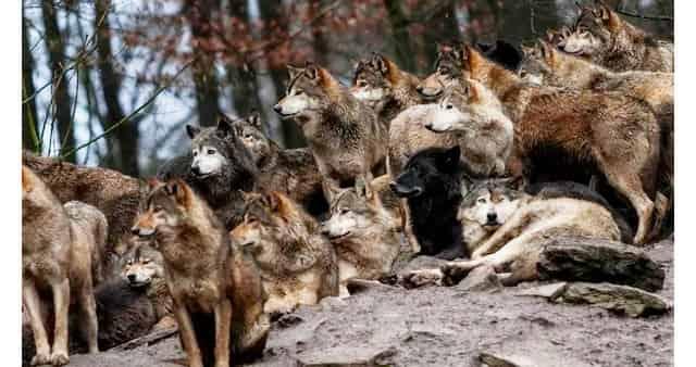 Отпугнуть диких зверей перед ночёвкой в лесу