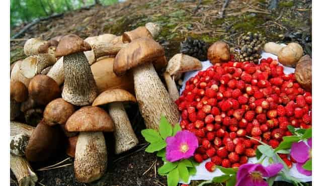 Вода, еда и дрова в лесу - найти, когда заблудились