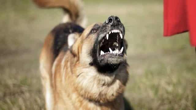 Что делать, если на вас напала собака, как вести себя – полезные советы от опытного кинолога
