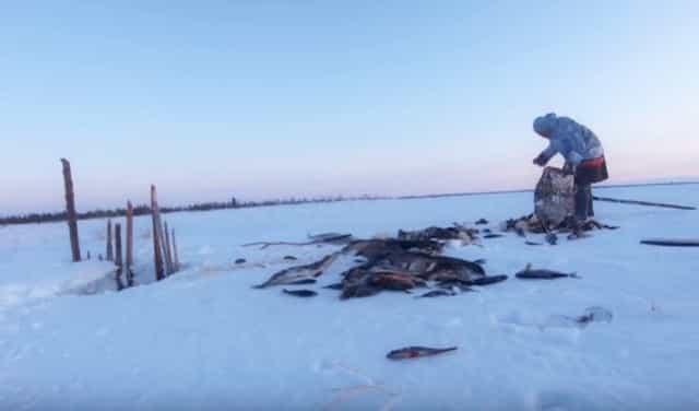 Как ловят рыбу северные народы